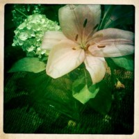 The flowers of love & entitlement