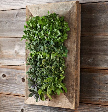 Reclaimed Wood Wall Planter for Herbs