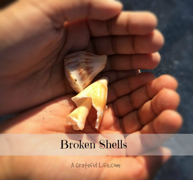 broken shells |A Grateful Life